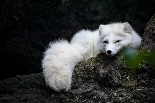 artic fox myembroiderypassions blog